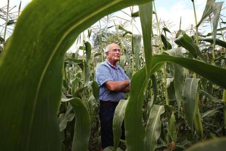 Steve Verrill, 80, of Verrill Farm in Concord grows corn on 200 acres.
