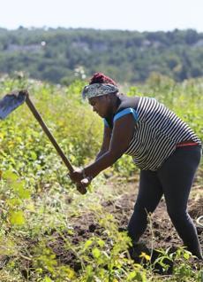 Henrietta Nyaigoti gets help from daughter Avah Delcaruz and nephews Isack Onchiri and Barack Kaffa as they harvest chinsaga.